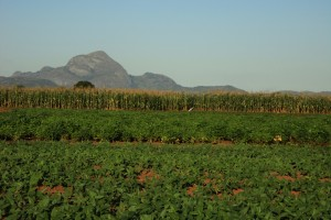 Agricultural research fields, Mozambique